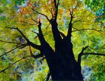 结构树启用 库存照片