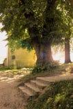 结构树和台阶 免版税库存照片