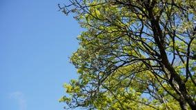结构树和叶子 免版税图库摄影