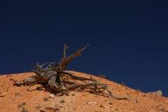结构树和土 免版税库存图片