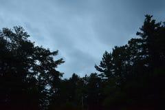 结构树和天空 免版税库存照片