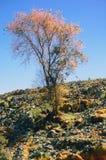 结构树和山 免版税库存图片