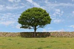 结构树和岩石范围 库存图片