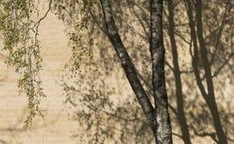 结构树和影子 免版税库存图片