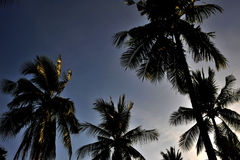 结构树和日落 库存照片