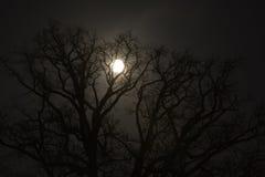 结构树和月亮 免版税图库摄影