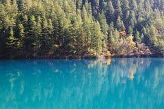 结构树和湖在Jiuzhaigou 图库摄影
