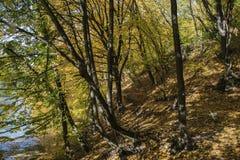 结构树和湖 免版税库存照片
