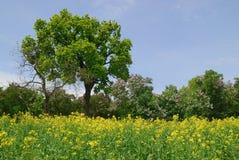 结构树和花在国家(地区) 免版税库存图片