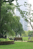 结构树和草 免版税库存照片