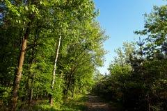 结构树和路 免版税库存图片