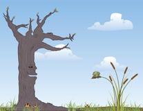 结构树和青蛙 图库摄影