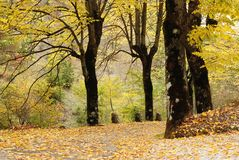 结构树和黄色叶子 库存图片