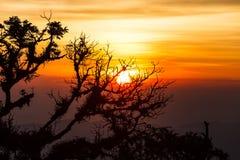 结构树在与星期日的光芒的黎明 免版税库存图片