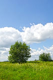 结构树在好夏日的一个草甸 库存照片