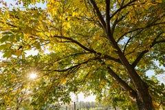 结构树在早期的秋天 图库摄影