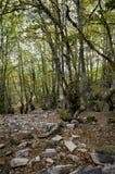 结构树在森林里 免版税库存照片