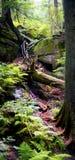 结构树在森林里 库存图片