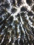 结构树在森林里 免版税库存图片