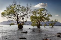 结构树在水中 图库摄影