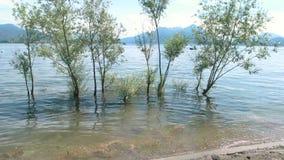 结构树在水中 股票录像