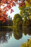 结构树在池塘 免版税库存图片
