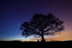 结构树在满天星斗的天空下 库存图片