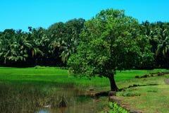 结构树在绿色乡下 免版税库存照片