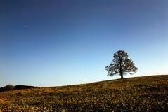 结构树在花被撒布的草甸 免版税库存照片