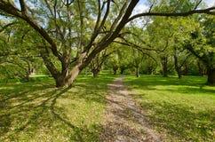 结构树在蒙特利尔植物园里 免版税库存图片