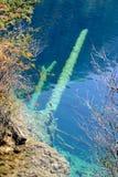 结构树在Jiuzhaigou的水中 库存照片