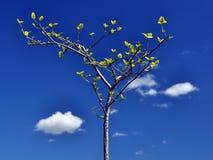结构树年轻人 免版税库存照片