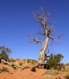 结构树扭转了 免版税库存图片