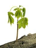结构树木头 库存照片