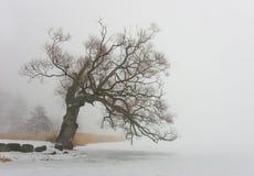 结构树杨柳 库存照片
