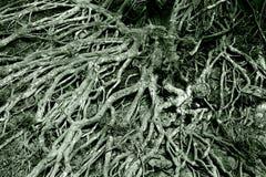 结构树根缠结  库存照片