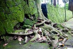结构树根 免版税图库摄影