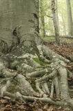 结构树根1 免版税库存图片