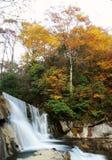 结构树瀑布 图库摄影