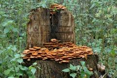 结构树用蘑菇 免版税库存照片