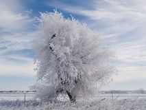 结构树白色 免版税库存照片