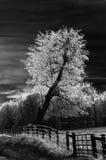 结构树白色 库存图片