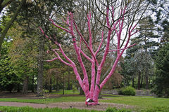 结构树的保护免受寒冷 库存图片