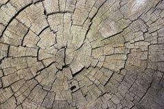 结构树的剪切 免版税库存照片