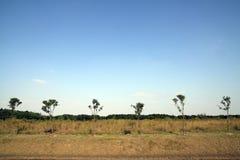 结构树的原野 免版税图库摄影