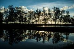 结构树的反映在湖 图库摄影