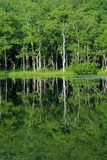 结构树的反映在湖 库存照片