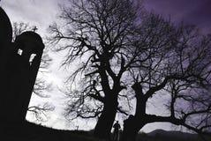 结构树的教会和剪影 库存照片