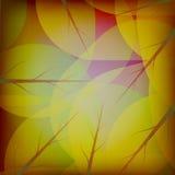 结构树的新鲜的叶子 库存照片