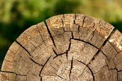 结构树的横断面 图库摄影